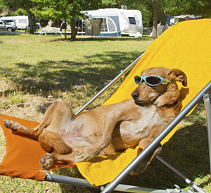 Pet Friendly RV Resort - Cherry Valley Lakes Resort